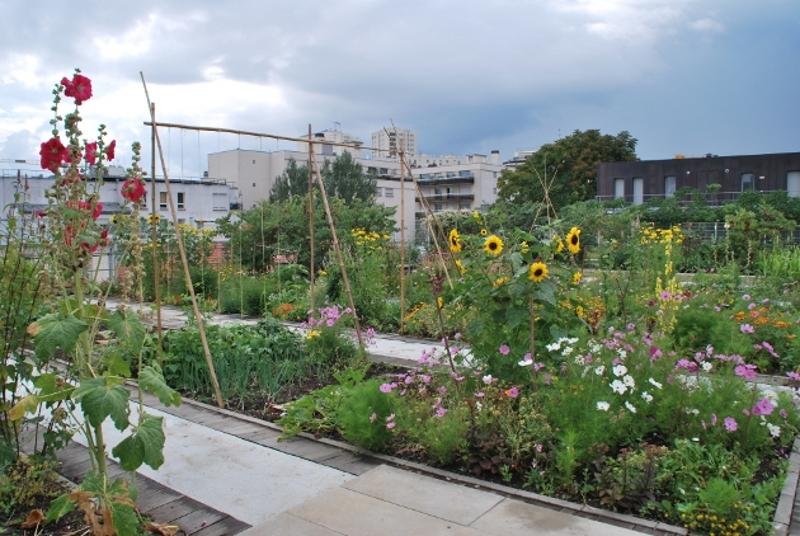 Collectif ip agriculture urbaine for Jardin porte de saint cloud